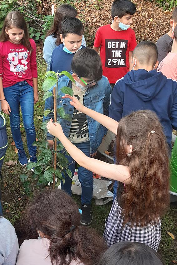 Klassen 5 pflanzen Apfelbaum